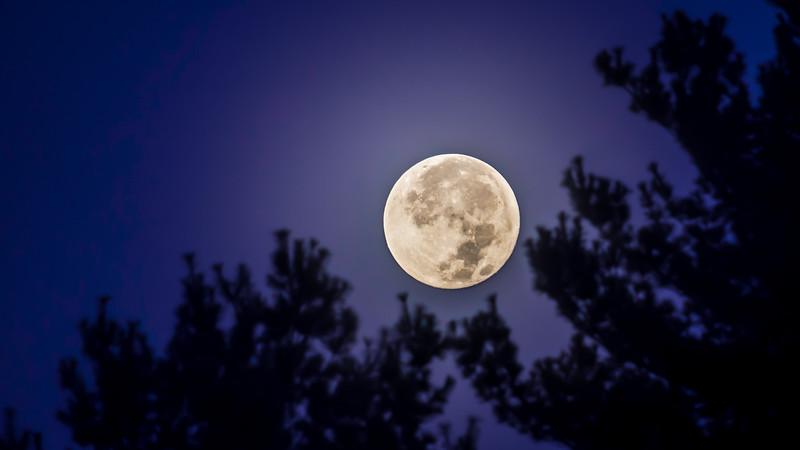 moon night1 (1 of 1).jpg