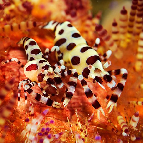 shrimp coleman .jpg