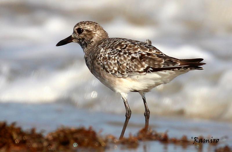 Bird 10-17-15 Port A 015.jpg