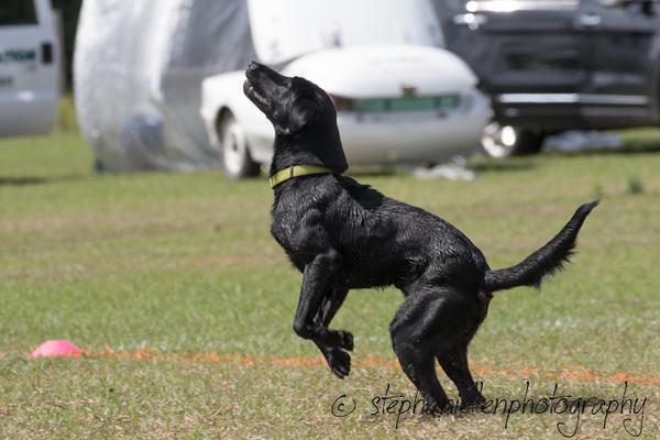 _MG_3043Up_dog_International_2016_StephaniellenPhotography.jpg