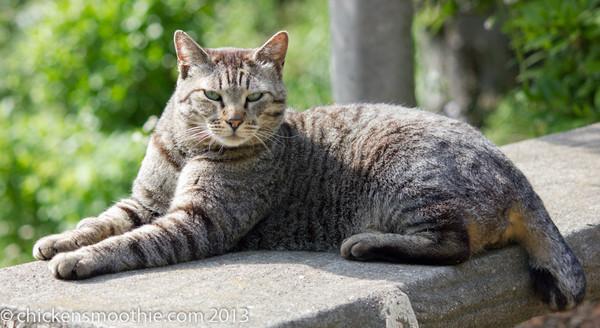Cats (domestic)