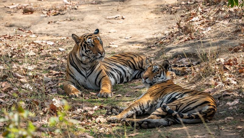 India_April_2019-815.jpg