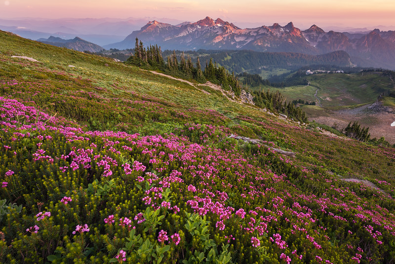 Rainier Mountain Heather Alpenglow