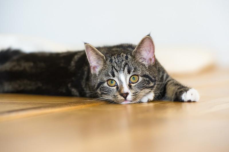 Cat , Katt , Nala