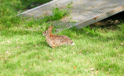 20140412 Brady Noah Rabbits