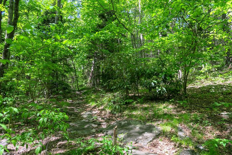 Mountains-to-Sea Trail -- 4,480'