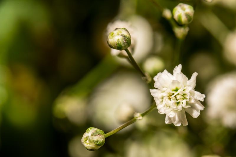 Macro_Flower-8836.jpg