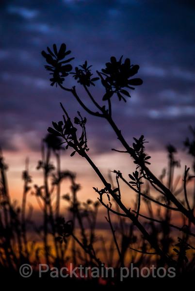 Weeds  -  WE1