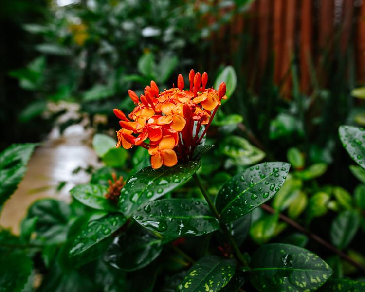 borderless-photography-mexico-wet-flower.jpg