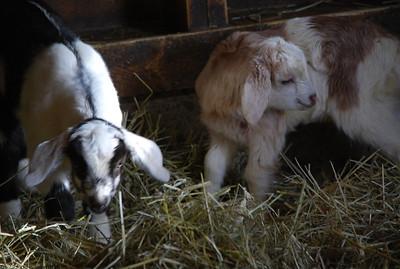 Farm Images 2013