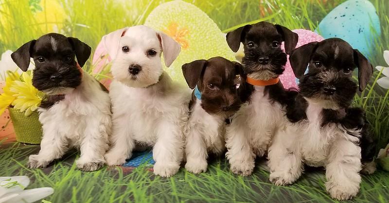 Mystic pups 024.jpg