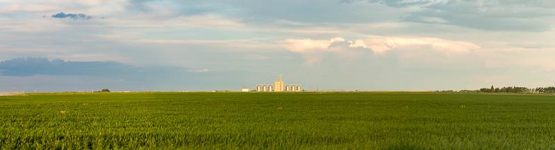 barley 69.jpg