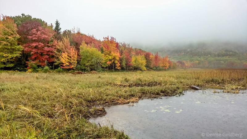 autumn colors pop