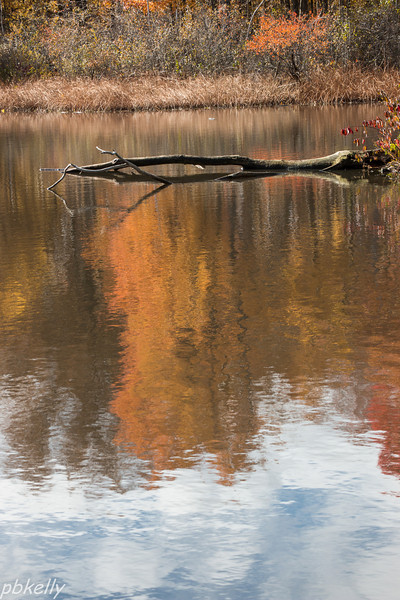 11-03.  Went to North Chagrin Reservation with Marilyn Beasley.  It was a beautiful day with wonderful reflections.