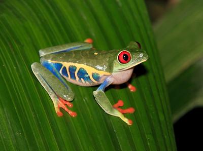 CostaRica2010