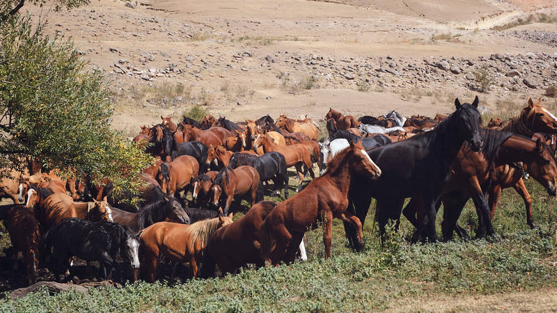 Horses, Almaty, Kazakhstan, 2014.