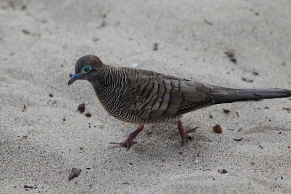 Hawaii Birds