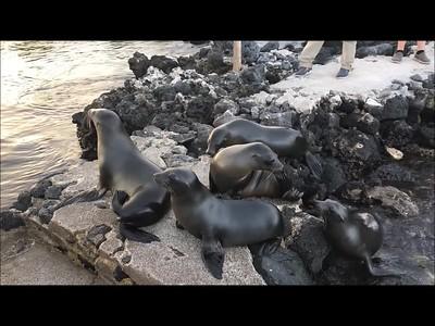 Evolution Video Compilation