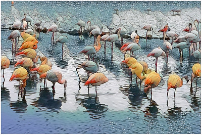 Flamingos and other - Sigean Park