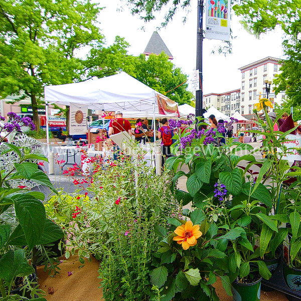 Easton Farmers Market 7/1/17