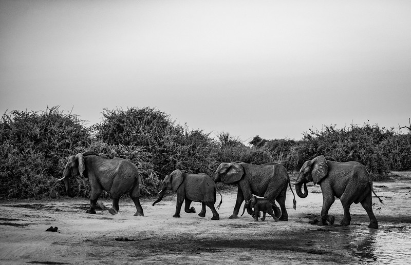 Botswana_June_2017 (4400 of 6179).jpg