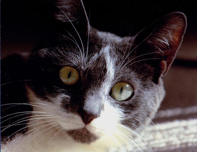 May I be Curious cat 1.jpg