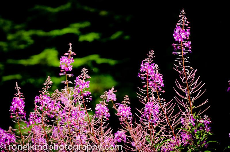 Alaska-0224.jpg