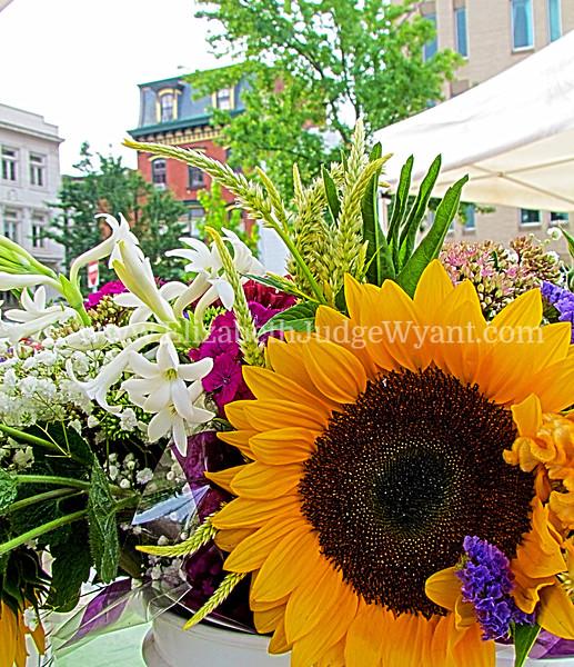 Easton Farmers Market, Easton, PA  8/25/2012