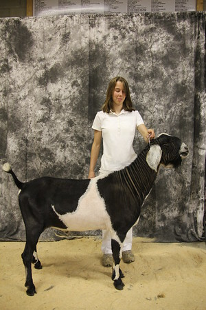 Additional Individual Goat Pictures