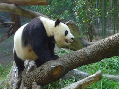 San Diego Zoo 2004