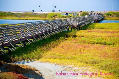Bolsa Chica Ecological Reserve: September 13, 2011