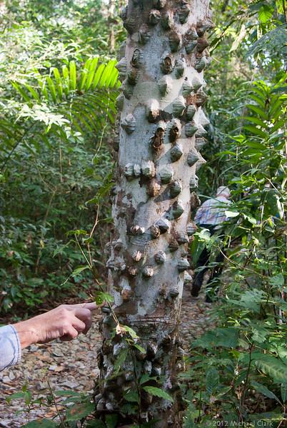 Panama 2012-11-2.jpg