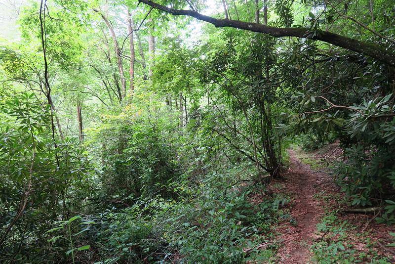 Thompson River Trail - 2,600'