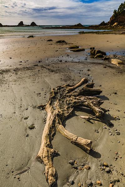 Beach Burl