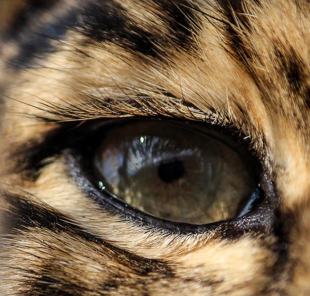 Jane L ~ Eye Catching.jpg