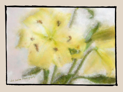 Flowers and Paintings