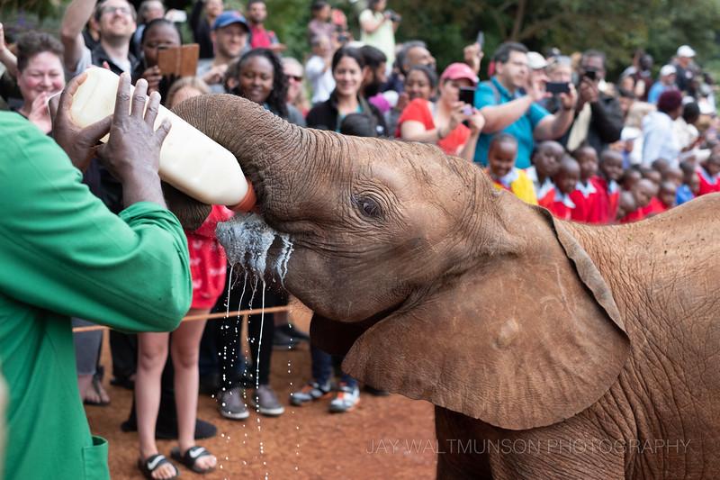 Jay Waltmunson Photography - Kenya 2019 - 104 - (DSCF2650).jpg