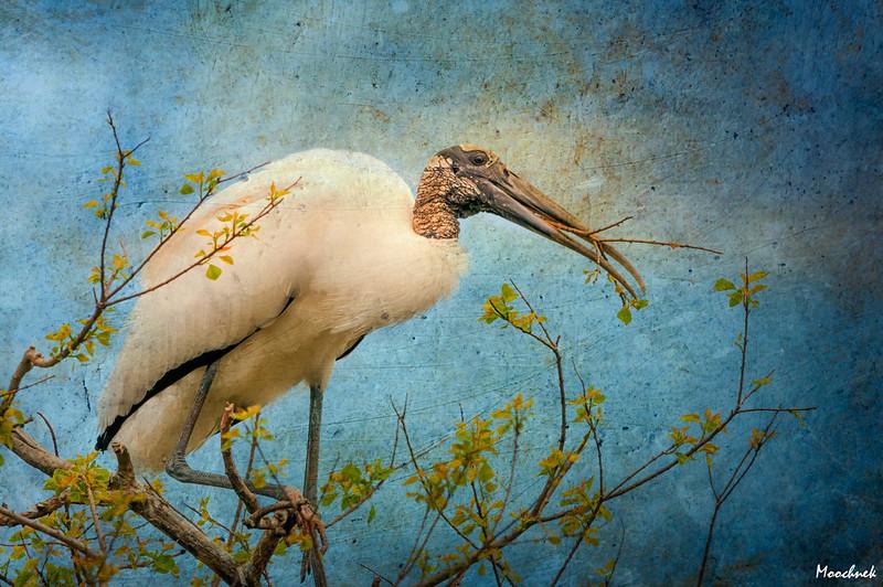 Stork in Preparation