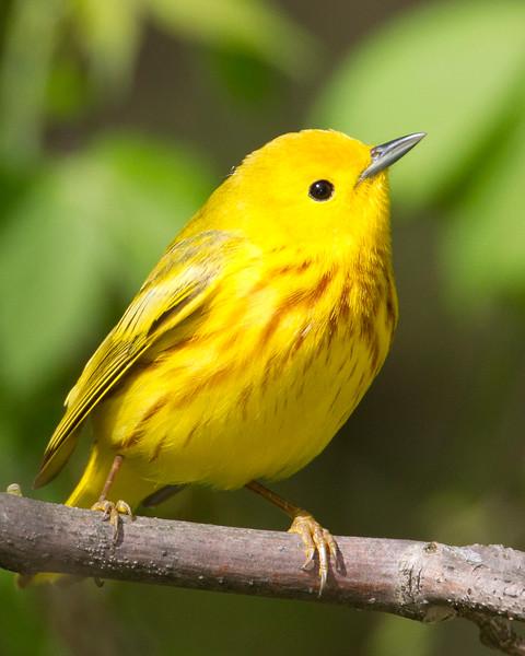 yellow13-4.jpg