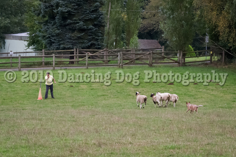 PacNW_HT_Sun_Sheep-6580