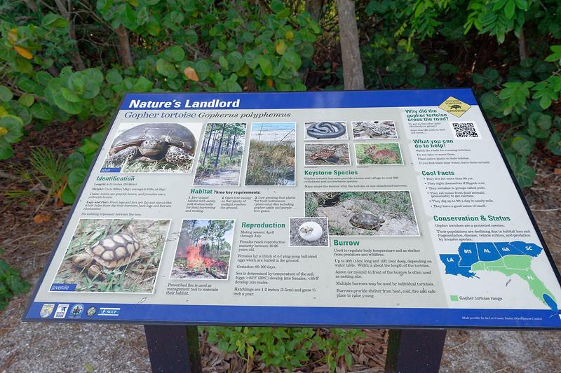 Gopher Tortoise Information Plaque