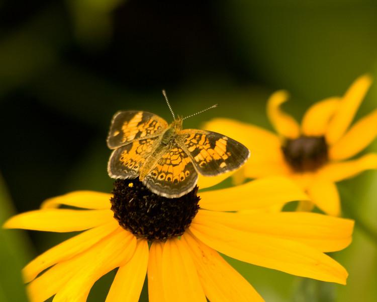 butterflies_QBG009.jpg