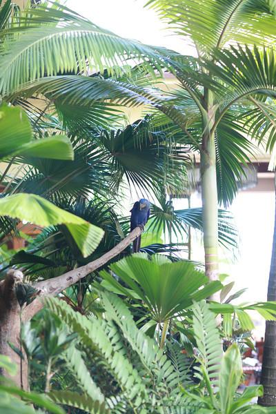 Kauai_D5_AM 222.jpg