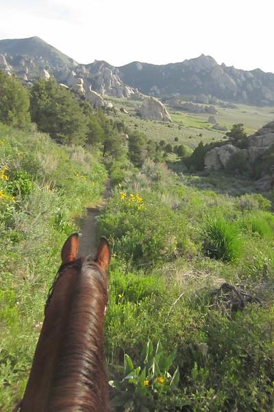 Riding Hillbillie Willie the Standardbred in the City of Rocks endurance ride