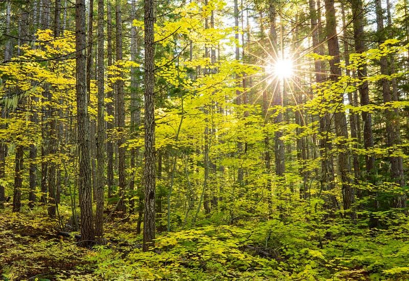 sunburst forest.jpg