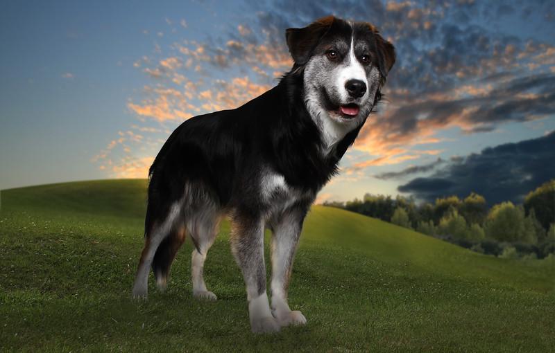 dog-colline.jpg