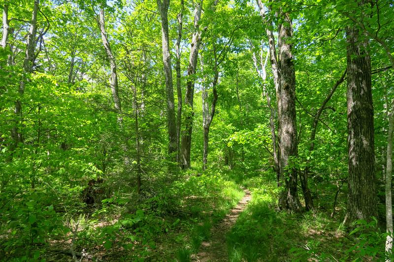 Mountains-to-Sea Trail -- 4,620'