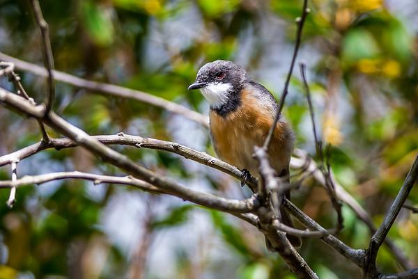 2017 Farourite bird images