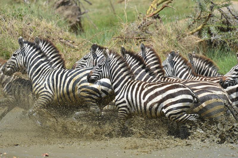 East Africa Safari 341.jpg
