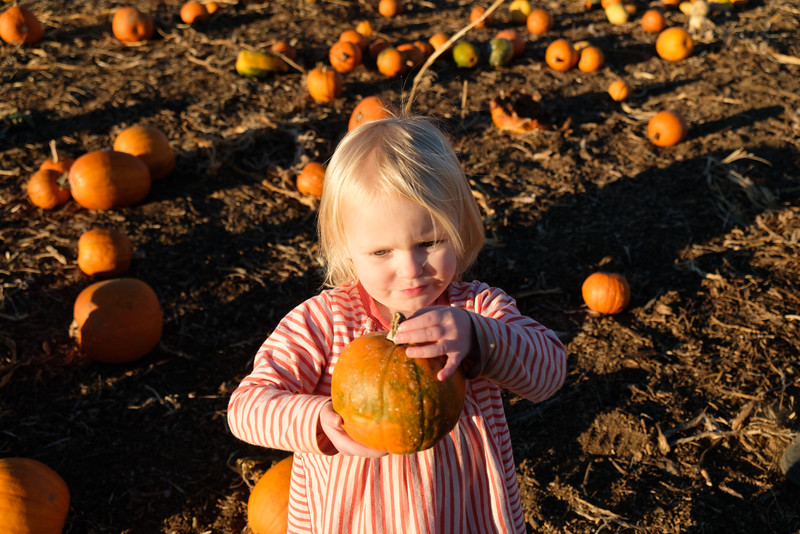 20161107 125 Great Country Farms.jpg